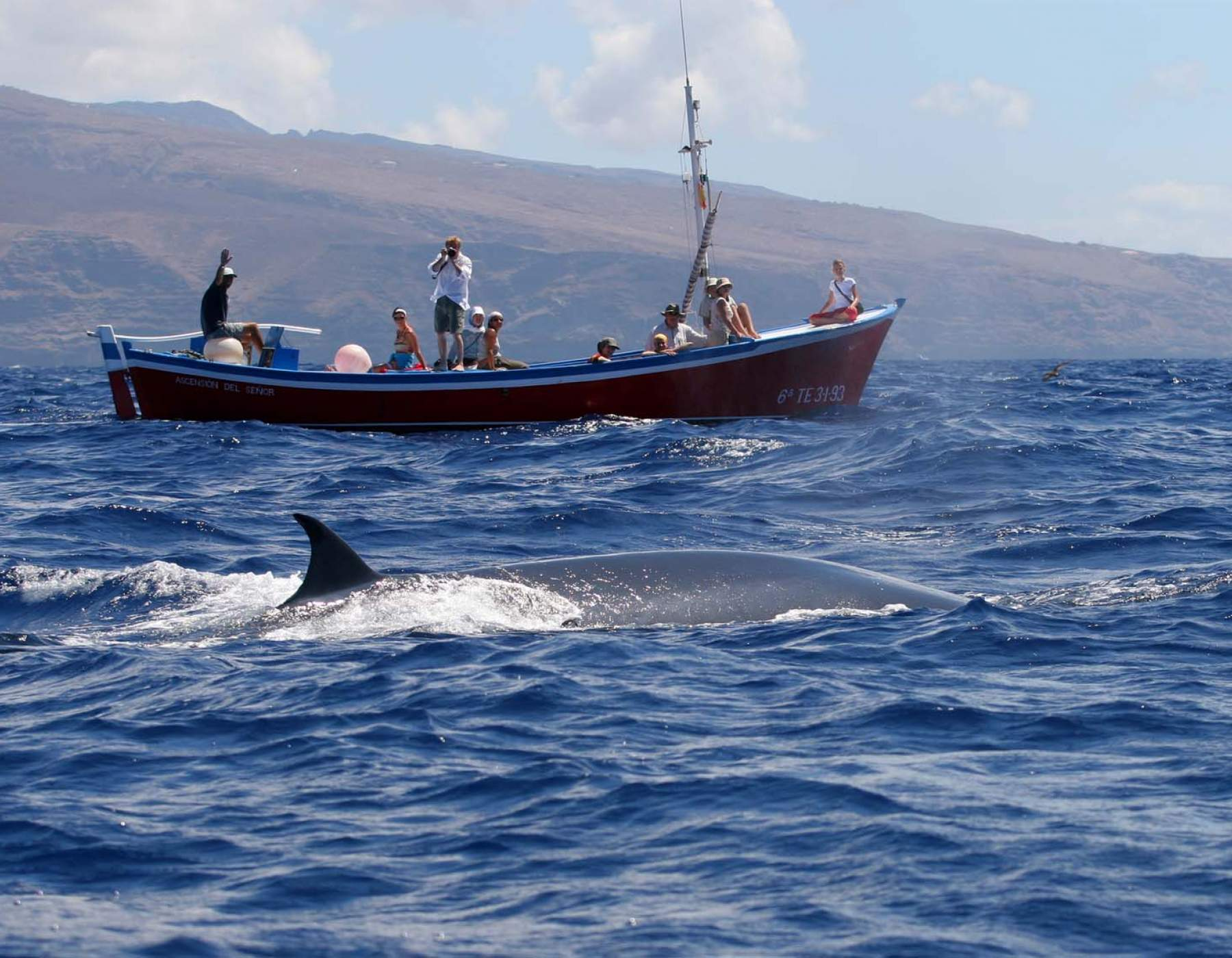 Whale Watching on La Gomera