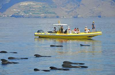An inflatable boat at whale watching