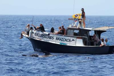 Whale Watching boat on La Gomera